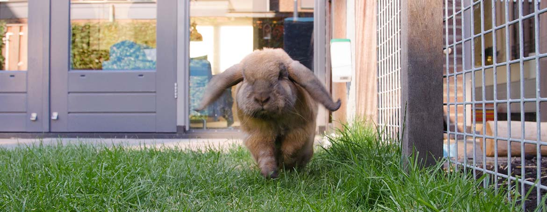 Gedrag konijn