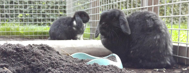 Huisvesting konijnen
