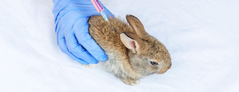 Inenten van konijnen