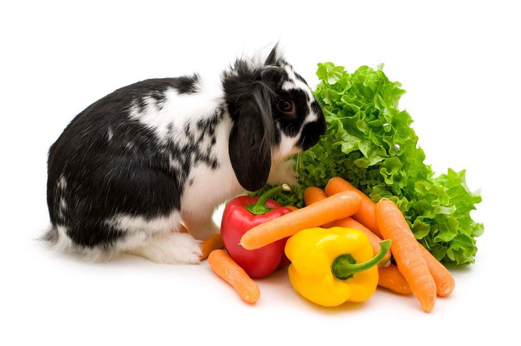 Konijn groente | Animal Home