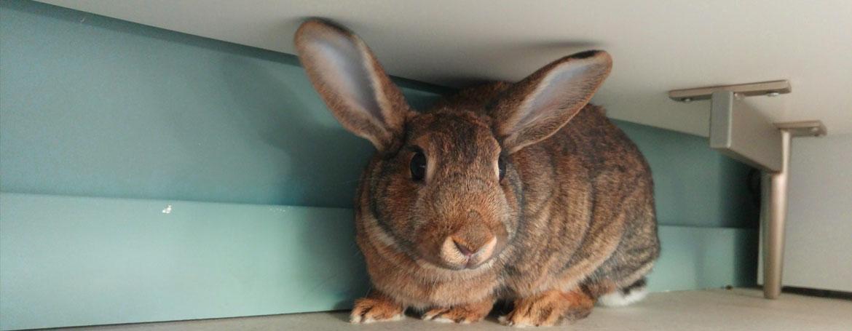 Algemene informatie over konijnen | Animal Home