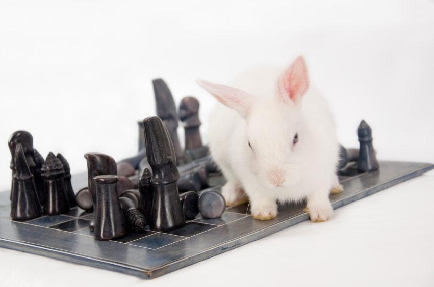Wat te doen bij valse konijnen | Animal Home