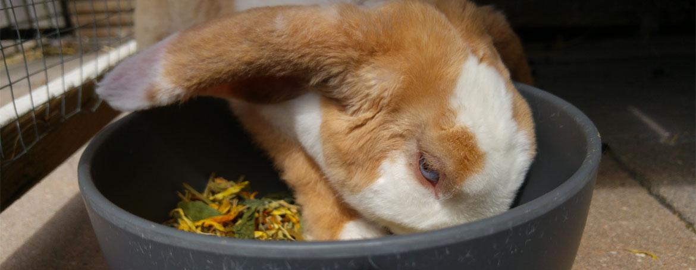 Voeding konijn | Animal Home