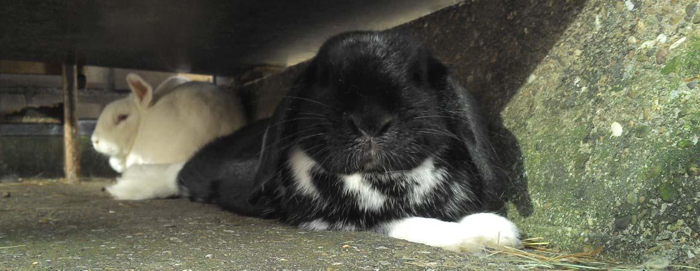 Ziektes bij konijnen