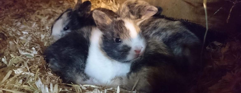 Help een nestje konijnen