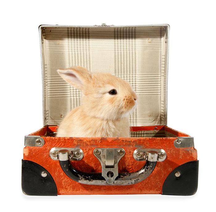 Vakantieopvang | Animal Home