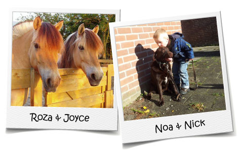 Roza, Joyce en Noa | Animal Home