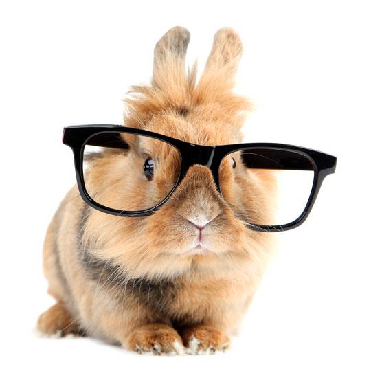 Informatie over het houden en verzorgen van konijnen en cavia's | Animal Home