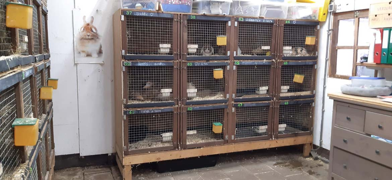 De verblijven voor onze konijnen en cavia's.