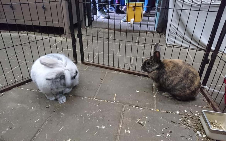 Speeddate konijnen.