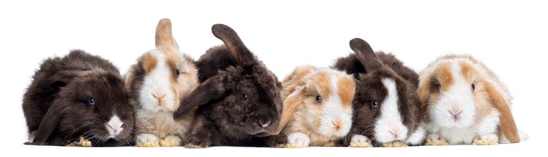 Afstand doen van uw konijn | Animal Home