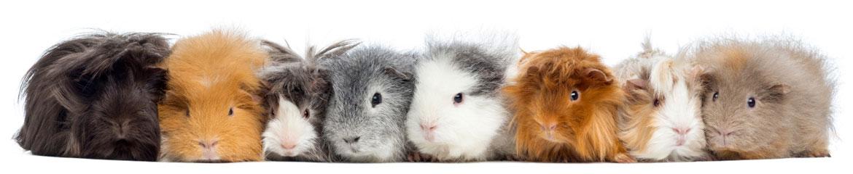 Neem contact met op met Animal Home