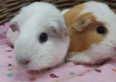 Niki &Sol