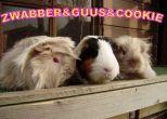 Zwabber, Guus en Cookie